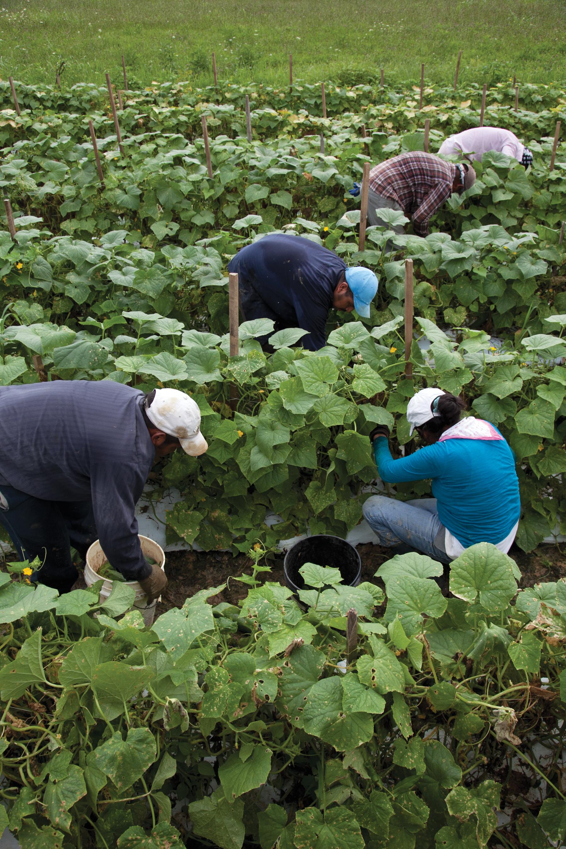 migrant workers.jpg